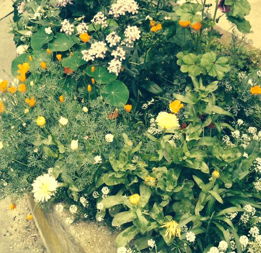 Fleurs_Humeurdemoutard